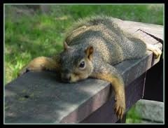 lazysquirrel